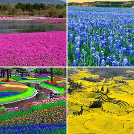 حقول ملونة ورائعة.. تعرفوا إلى أفضل وأجمل حدائق الزهور في العالم!