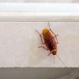 6 علاجات منزلية فعالة للقضاء على الصراصير فورا دون الحاجة لقتلها