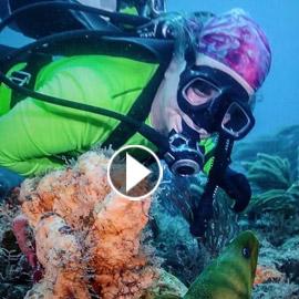 فيديو يوثق أسماك