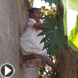 فيديو وصور عجوز مكسيكية (88 عاما) تتسلق الأشجار بلياقة مذهلة لتجني الفاكهة لتبيعها وتقطع الخشب