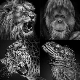 مشروع (نحن نشبهكم).. صور بورتريه مدهشة لحيوانات حديقة موسكو