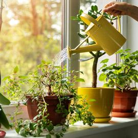 تموت نباتاتك رغم حرصك على العناية بها؟ 5 أخطاء شائعة قد تكون السبب!