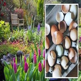 كيف تستخدم قشور البيض وبقايا القهوة في حديقتك؟