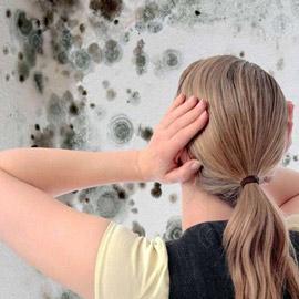 خبير يحذر من خطورة العفن على جدران البيوت
