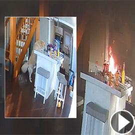 كلب جائع يشعل حريقا بمنزل.. أشعل الموقد لتسخين الطعام فاندلعت النار!