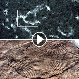 فيديو: اكتشاف أقدم حيوان على وجه الأرض في منطقة نائية لم يصلها البشر