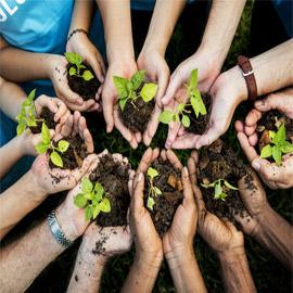 ماذا سيحدث للمناخ إذا زرع كل فرد من سكان الأرض شجرة سنويا لمدة 20  ..