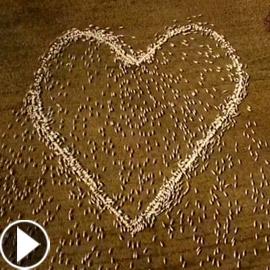 مزارع أسترالي لم يتمكن من حضور جنازة عمته.. فودّعها بفيديو الأغنام