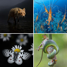 إليكم الصور المذهلة المشاركة في مسابقة مصور الحياة البرية لعام 2021