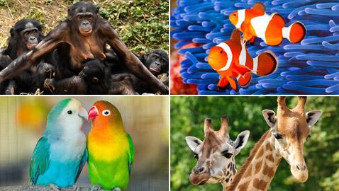 صور: تعرفوا إلى 15 طريقة غريبة مدهشة للتزاوج في عالم الحيوان