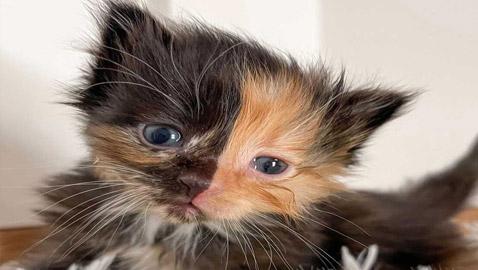 القطة اليتيمة مشمش تخطف الأنظار بلون فرائها النادر! صور