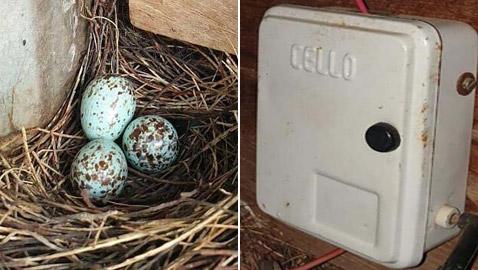 قرية هندية تعيش 45 يوما بالظلام لإنقاذ طائر عشعش بصندوق الكهرباء!
