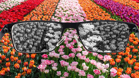 الأمر ليس كما نتصور.. كيف يرى المصابون بعمى الألوان العالم؟