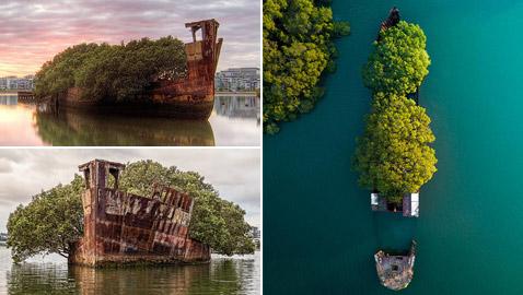 بالصور: تعرفوا إلى السفينة المهجورة التي حو لتها الطبيعة إلى غابة عائمة