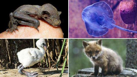 صور مفاجئة.. كيف تبدو صغار الحيوانات مختلفة عن المتوقع؟