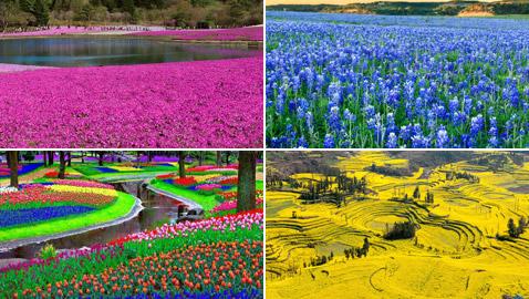 حقول ملونة ورائعة.. تعرفوا إلى أفضل وأجمل حدائق الزهور في العالم