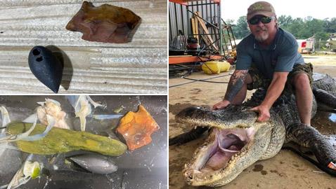 صور: صياد أمريكي يعثر على معدات عمرها آلاف السنين في بطن تمساح