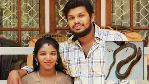 الحكم بالسجن المؤبد لهندي قتل زوجته بلدغة أفعى كوبرا! صور